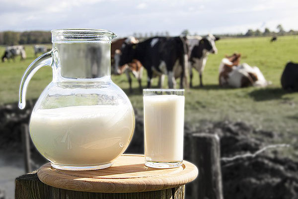 Why Makes Grass-Fed Whey Protein is Better